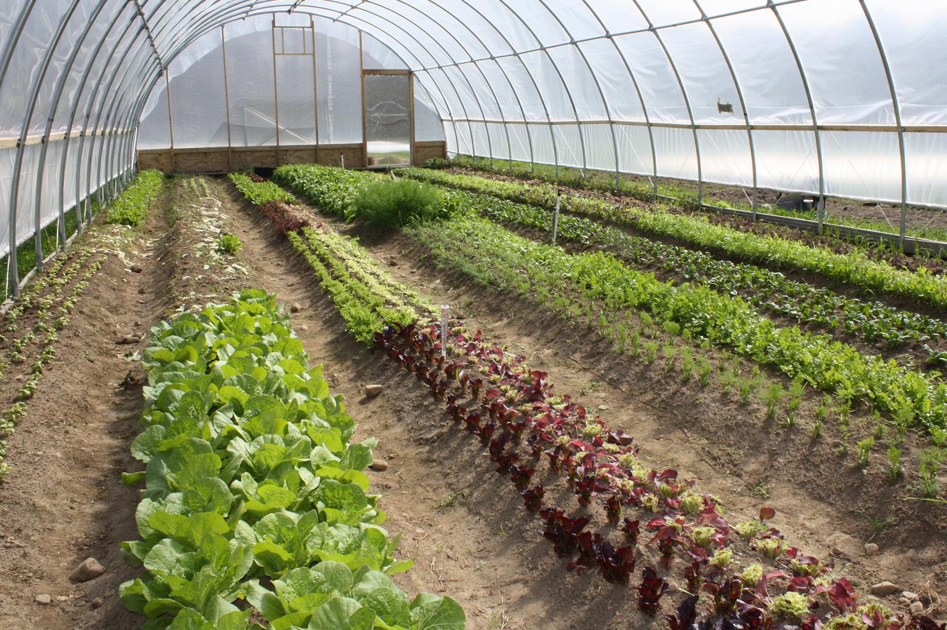 Curso de horticultura for Sustrato para mesa de cultivo