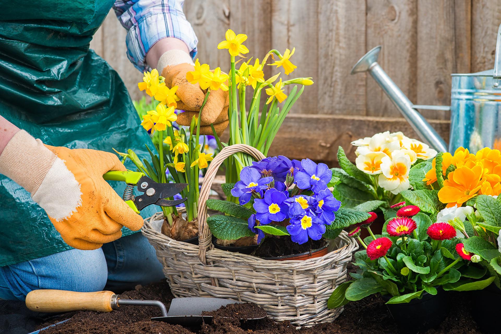Curso de producci n de plantas ornamentales for Produccion de plantas ornamentales